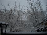 2月20日雪景色